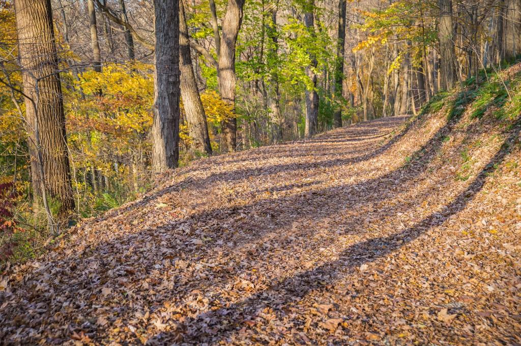 One of many Pocopson trails